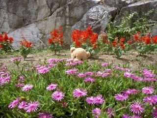 クマのルーニー 花畑