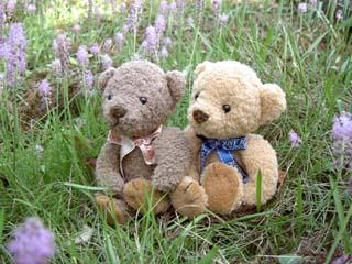クマのルーニー 草むらのルーニー