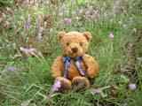 クマのルーニー 草むら