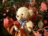 クマのルーニー・バニラ 紅葉した葉