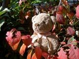クマのルーニー 紅葉した葉とルーニー・チョコ