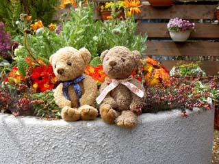 クマのルーニーとベゴニア