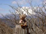 クマのルーニー・チョコと富士山