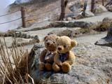 クマのルーニー 大涌谷