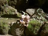クマのルーニー 岩の上