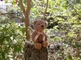 クマのルーニー 木漏れ日