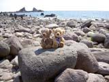 クマのルーニー 真鶴岬