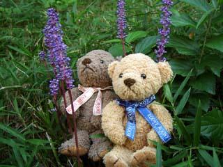 クマのルーニーとヤブラン
