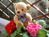 クマのルーニー ベランダにて