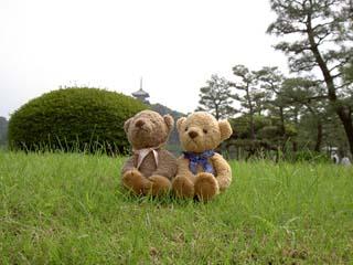 クマのルーニー 芝生の上