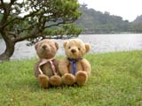 クマのルーニー 芝生と松
