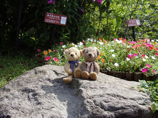 クマのルーニー 岩の上で