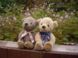 クマのルーニー オジギソウとルーニー