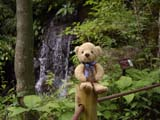 クマのルーニー 滝とルーニー・バニラ