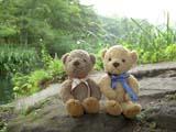 クマのルーニー 水辺の石の上