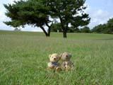 クマのルーニー 草原