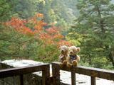 クマのルーニー 紅葉