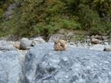 クマのルーニー 河原
