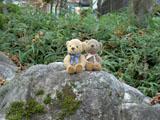 クマのルーニー 茂み