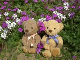 クマのルーニー 花