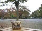 クマのルーニー 広場