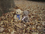 クマのルーニー 落ち葉