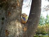 クマのルーニー 枝の上