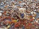 クマのルーニー 公園の落葉