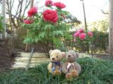 クマのルーニー 牡丹