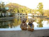 クマのルーニー 源平池