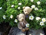 クマのルーニー Roonyとノースポール