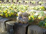 クマのルーニー Roonyとビオラ