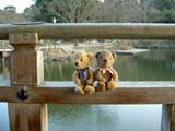 クマのルーニー 奈良公園 浮見堂