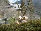 クマのルーニー 長谷寺の庭