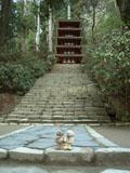 クマのルーニー 室生寺の五重塔