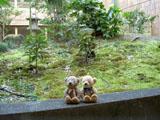 クマのルーニー 奈良ロイヤルホテル