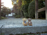 クマのルーニー 秋篠寺