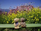 クマのルーニー 桃源郷 桃と菜の花