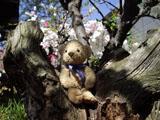 クマのルーニー 木