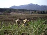 クマのルーニー 甲斐駒ヶ岳 草むら
