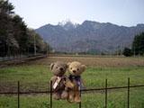 クマのルーニー 甲斐駒ヶ岳 柵