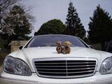クマのルーニー Mercedes-Benz S-Class