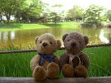 クマのルーニー 昭和記念公園 渓流広場