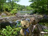 クマのルーニー 昭和記念公園 日本庭園