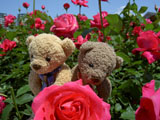 クマのルーニー 恋心