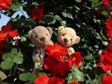 クマのルーニー ツル サラバンド