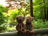 クマのルーニー 庭 池