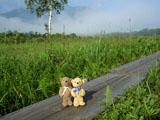 クマのルーニー 湿原と山