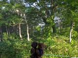 クマのルーニー 林