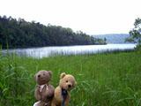 クマのルーニー 沼